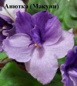 Фиалка Анютка Макуни ретро сиреневая фиолетовая