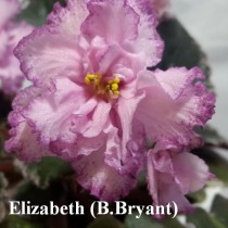 Фиалка Elizabeth розовая ретро Bryant