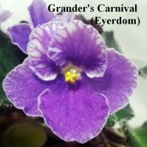 Фиалка Grander's Carnival синяя фиолетовая ретро Eyerdom