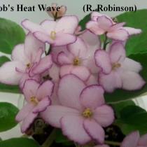 Фиалка Rob's Heat Wave розовая полумини