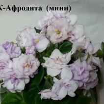 Фиалка СК-Афродита фото