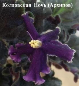 Фиалка Колдовская Ночь