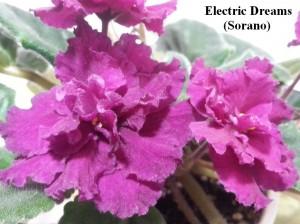 Фиалка Electric Dreams красные Sorano