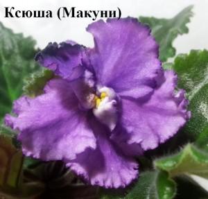 Фиалка Ксюша Макуни ретро фиолетовая