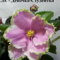 Фиалка Девочка - Студентка