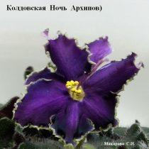 фиалка фиолетовая Колдовская Ночь Архипов