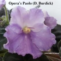 Фиалка Opera's Paolo фото