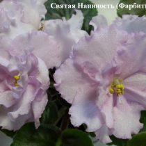Фиалка Святая Наивность Фарбитник белая розовая махровая