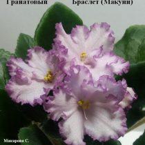 Фиалка Гранатовый Браслет розовая Макуни ретро