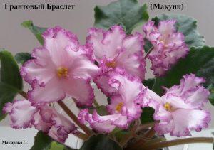 Фиалка Гранатовый Браслет Макуни ретро белые розовые