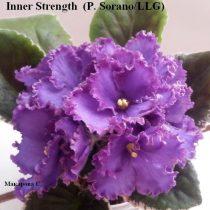 Фиалка Inner Strength Sorano синие анютки васильковые