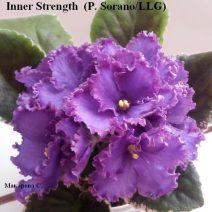 Фиалка Inner Strength фото