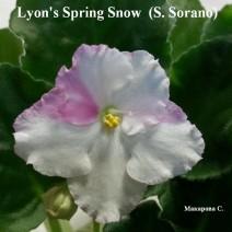 Фиалка Lyon's Spring Snow фото