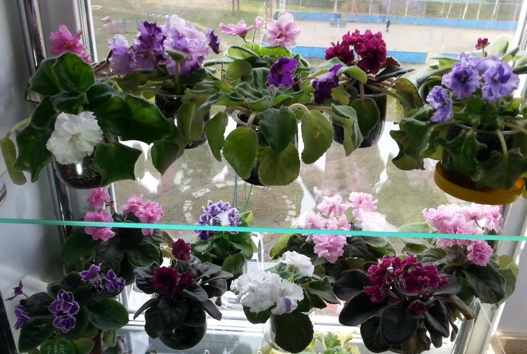 Уфа комнатные цветы