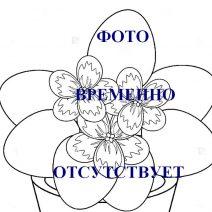 Фиалка ЕК-Голубоглазая Россия фото