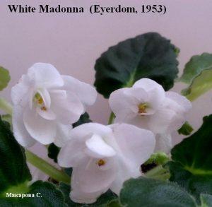 White Madonna Eyerdom белая махровая ретро герл листва