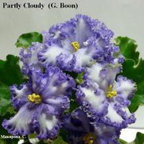 Фиалка Partly Cloudy белая голубая