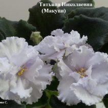 Фиалка Татьяна Николаевна фото