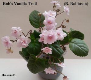 Фиалка Rob's Vanilla Trail розовая полумини трейлер