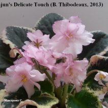Фиалка Cajun's Delicate Touch фото