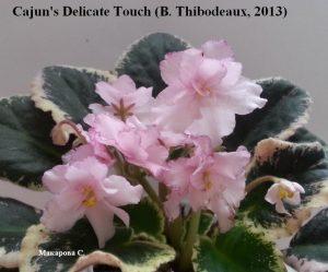 Фиалка Cajun's Delicate Touch розовая